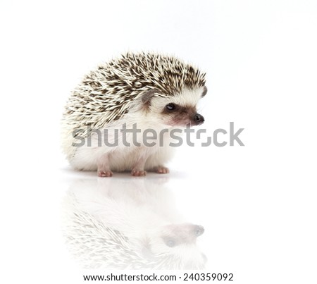 cute beautiful hedgehog rodent baby background - stock photo