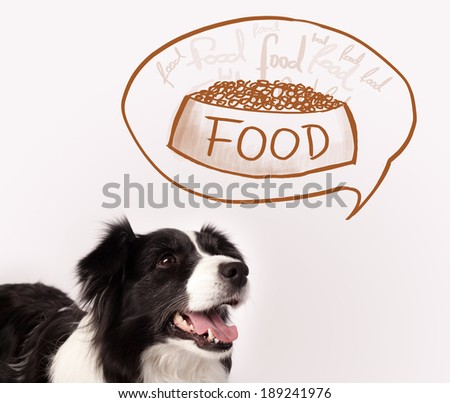 Dog Puts Head In And Out Of Food Bowl