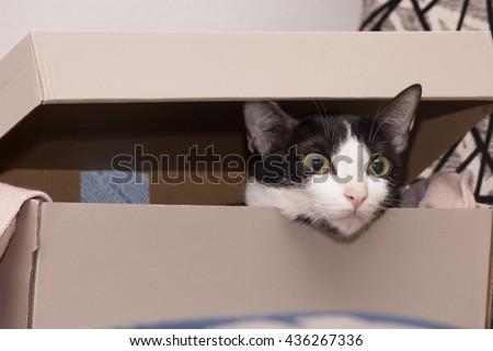 cute black and white Cat hiding in paper box - stock photo