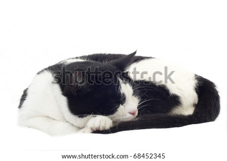 Cute black and white kitten isolated on white