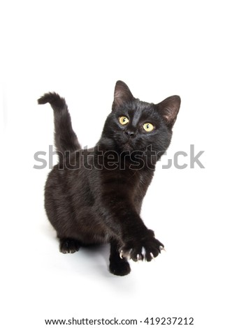 cute black baby kitten swinging its paw isolated on white background