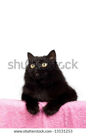 cute black cat isolated