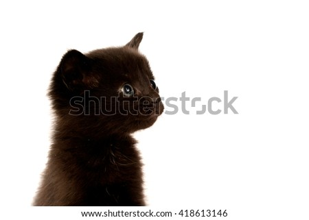 Cute black cat isolated on a white background