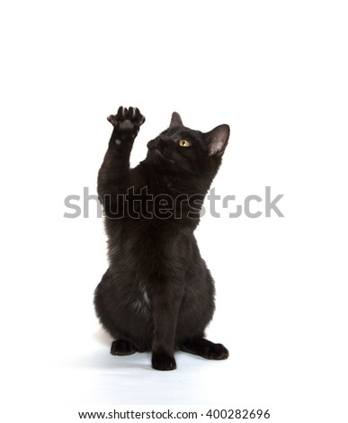 Cute black cat jumping and playing isolated on white background - stock photo