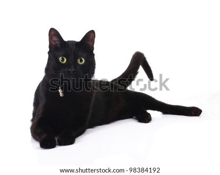 cute black cat lying isolated on white background - stock photo