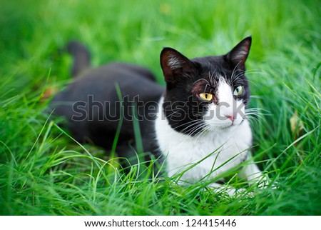 Cute black cat lying on green grass lawn, shallow depth of field portrait - stock photo