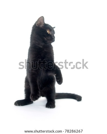 Cute black cat playing and jumping on white background