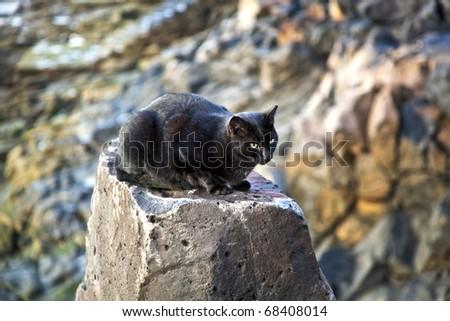 cute black cat sitting on a rock - stock photo