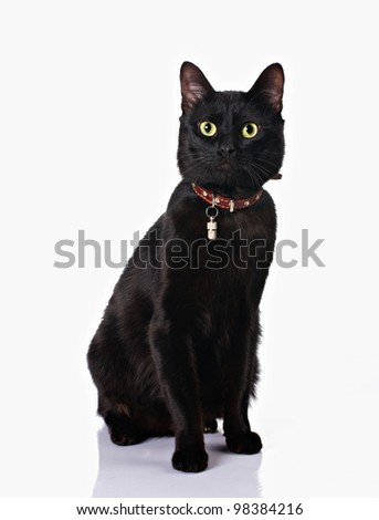 cute black cat with collar sitting isolated on white background - stock photo