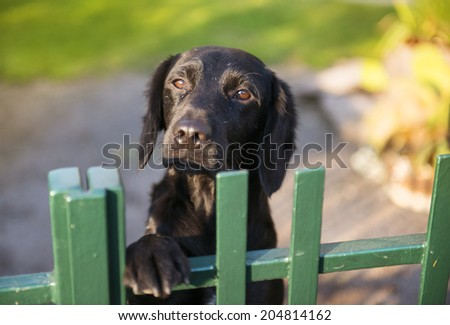 Cute black dog behind the garden fence - stock photo