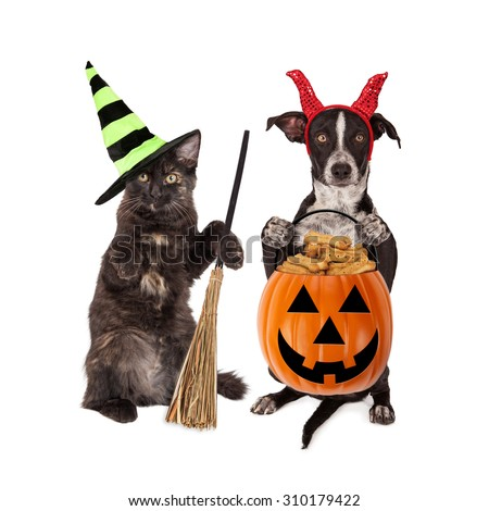 Cute black kitten and puppy dressed in Halloween costumes holding pumpkin filled with dog treats - stock photo