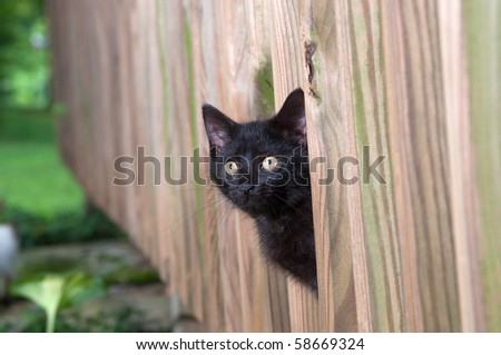 Cute black kitten peeking through a wooden fence - stock photo