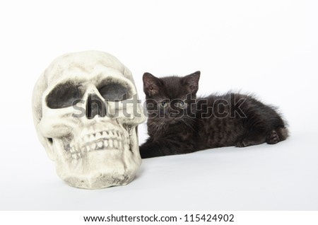 Cute black kitten with decorative Halloween skull on white background