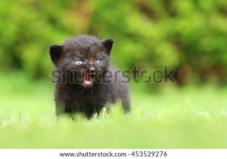 Cute black kitty - stock photo