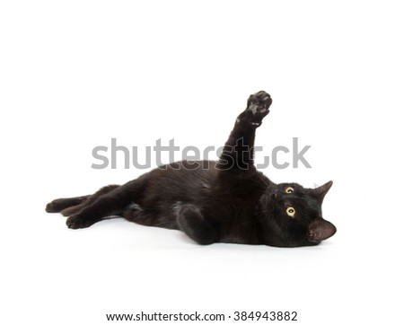 Cute black kitty laying down isolated on white background - stock photo