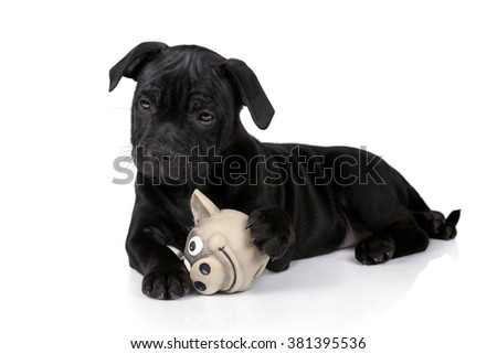 Cute black puppy with a toy on a white background