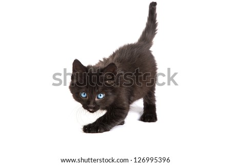 Cute black small kitten isolated on a white background - stock photo