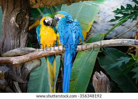 Cute blue and gold macaw in tropical forest - stock photo