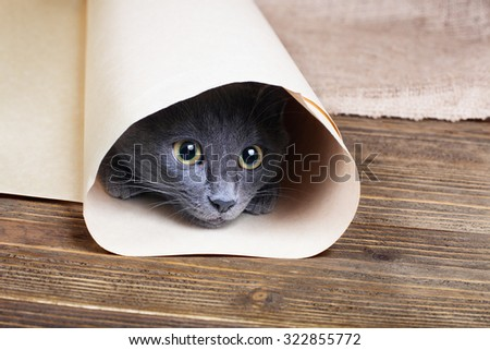 Cute blue kitten is sitting and playing in tube of paper. - stock photo