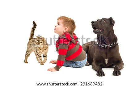 Cute boy, a dog Staffordshire Terrier and a cat Scottish Straight isolated on white background - stock photo