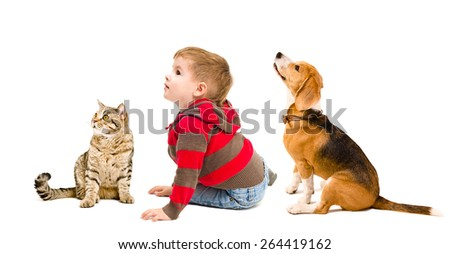 Cute boy, beagle dog and cat Scottish Straight sitting together isolated on white background, side view - stock photo