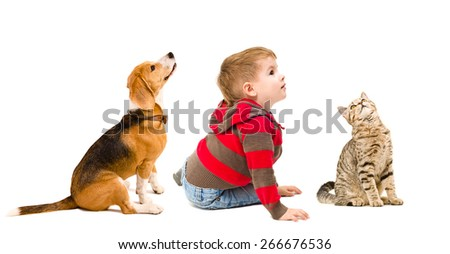 Cute boy, beagle dog and cat Scottish Straight sitting together, side view, isolated on white background - stock photo