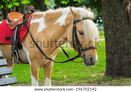 Cute bridled pony with blonde fringe ready to be ridden by children - stock photo