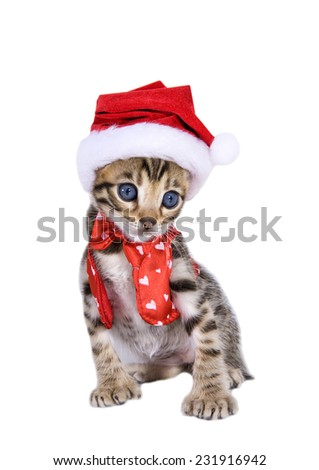 Cute brown kitten in red vest and bow tie with white hearts and wearing santa hat - stock photo