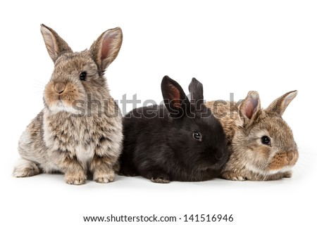 Cute bunnies isolated on white background - stock photo