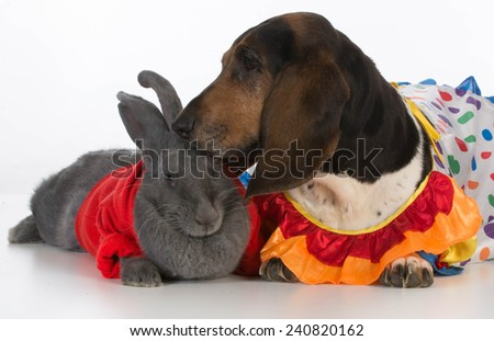 cute bunny and basset hound on white background - stock photo