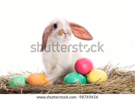 Cute bunny sitting among Easter eggs isolated on white - stock photo