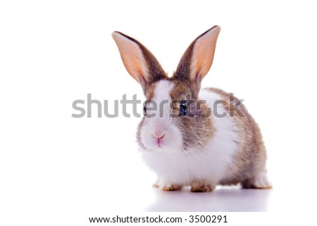 Cute bunny with big ears and curious look, looking at the camera. Isolated on white. - stock photo