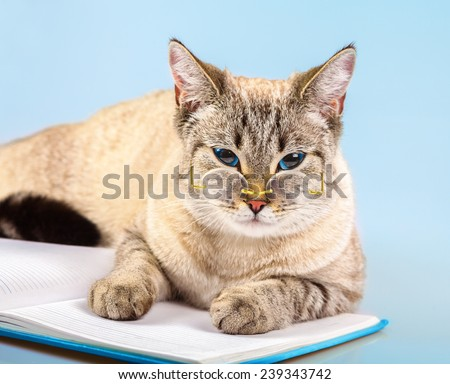 Cute business cat wearing glasses lying on notebook (book) - stock photo