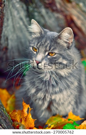 cute cat and fallen dry leaves, autumn - stock photo
