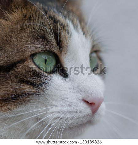Cute cat closeup