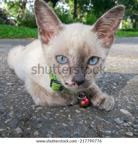 Cute cat enjoying his life ,available light . - stock photo