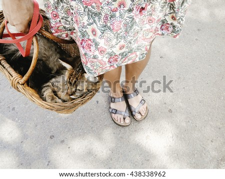 cute cat in basket, woman walking out with her pet in warm summer day, space for text - stock photo