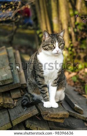 cute cat in the garden - stock photo
