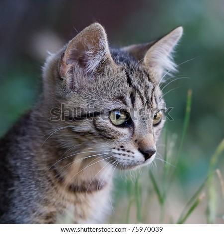 cute cat in the grass - stock photo