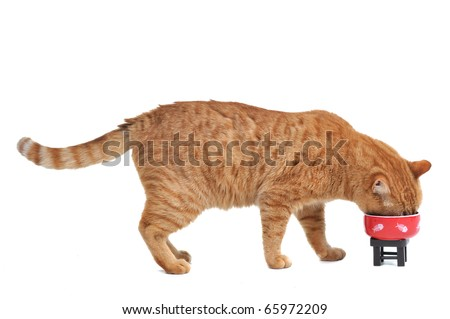 Cute Cat is eating his tasty lunch - stock photo