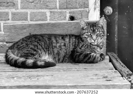 Cute cat is laying on a bench (black and white) - stock photo