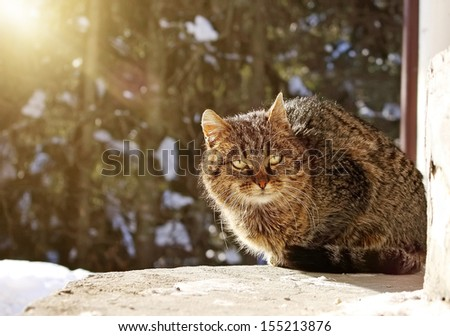 cute cat is sitting on porch in the winter - stock photo