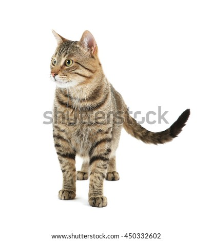 Cute cat, isolated on white