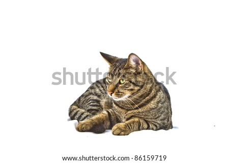 cute cat isolated on white - stock photo
