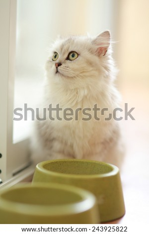Cute Cat Looking Up For Something - stock photo