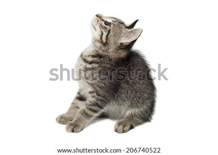 cute Cat looking up isolated on white background - stock photo