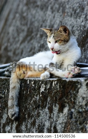 Cute cat lying on the wall - stock photo