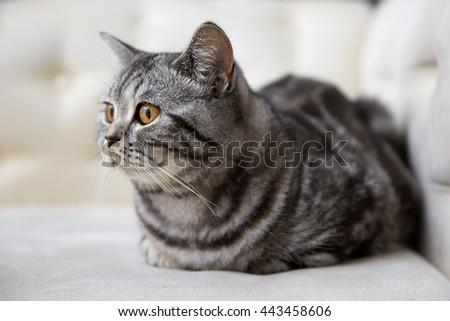 cute cat on sofa - stock photo