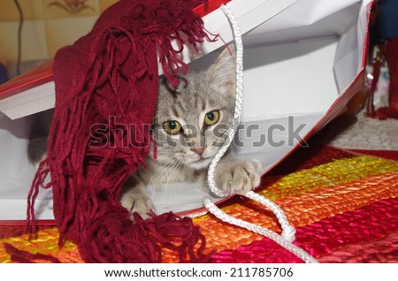 Cute cat playing with a paper bag. - stock photo