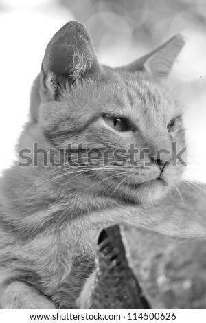 Cute cat portrait - stock photo